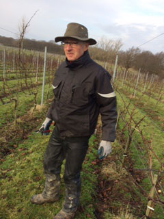 2 February 2017 / Midwinter in the vineyard picture