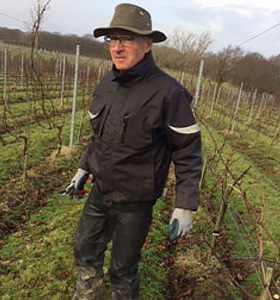 Midwinter in the vineyard picture