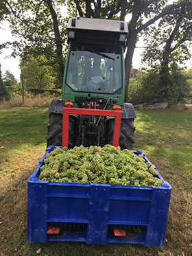 2019 Harvest Report – The year of two halves picture